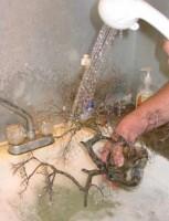 Rincer l'arbre