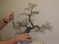 Peigner l'arbre
