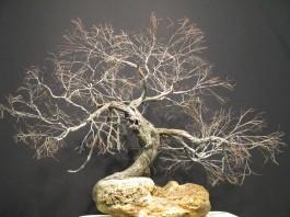027-12 L'arbre de la reconnaissance 17x18 $695.