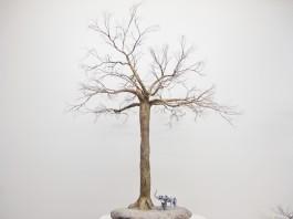 125-10 Baobab 28x23