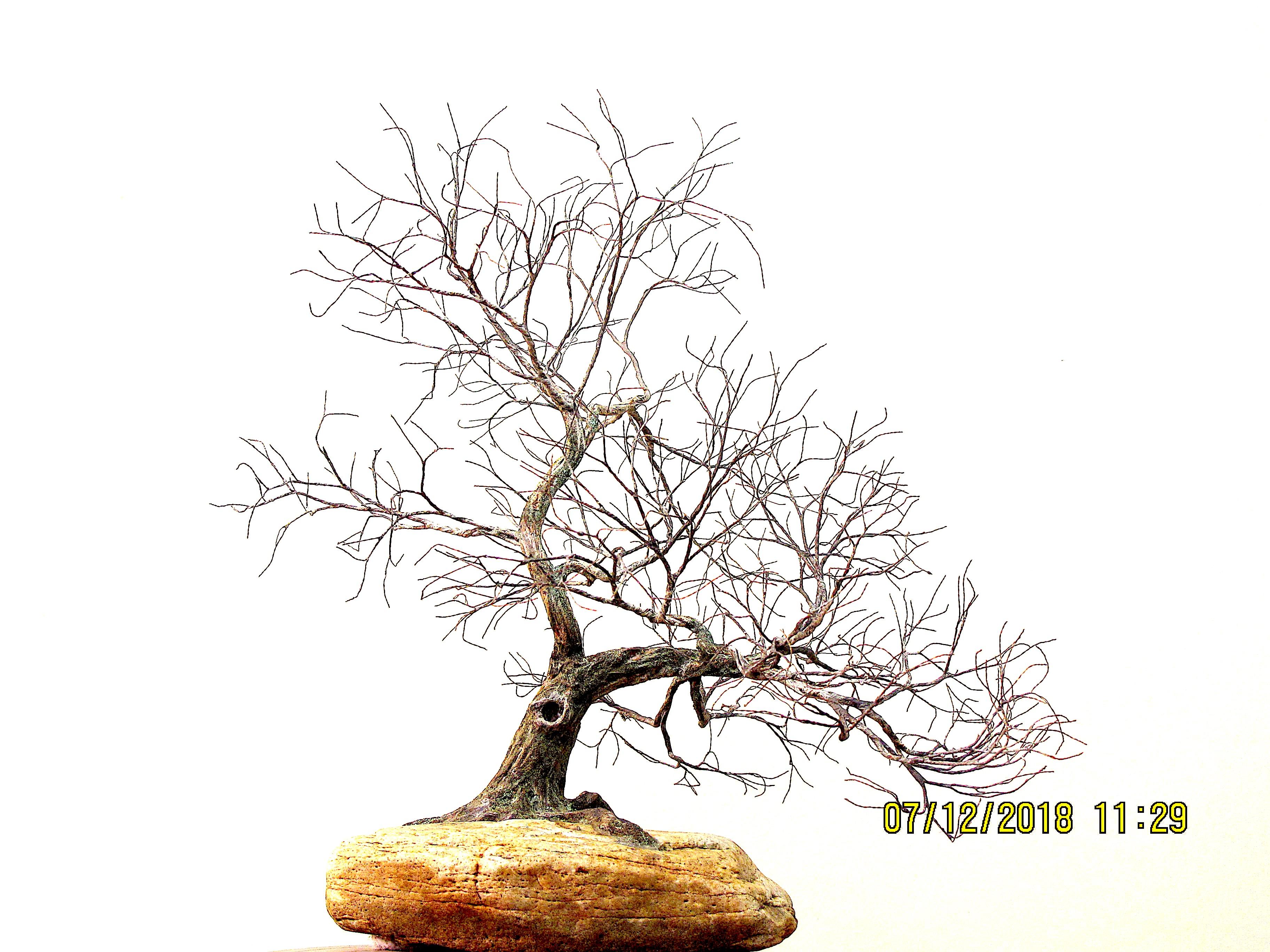 38-18-le-cerisier-15x14x13-645